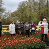 28.04.2016 - Seniorzy na wystawie kwiatów w Keukenhof.